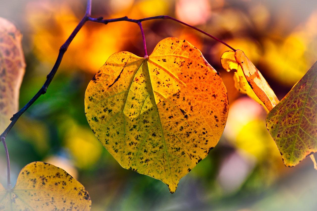autumn-leaves-3813775_1280